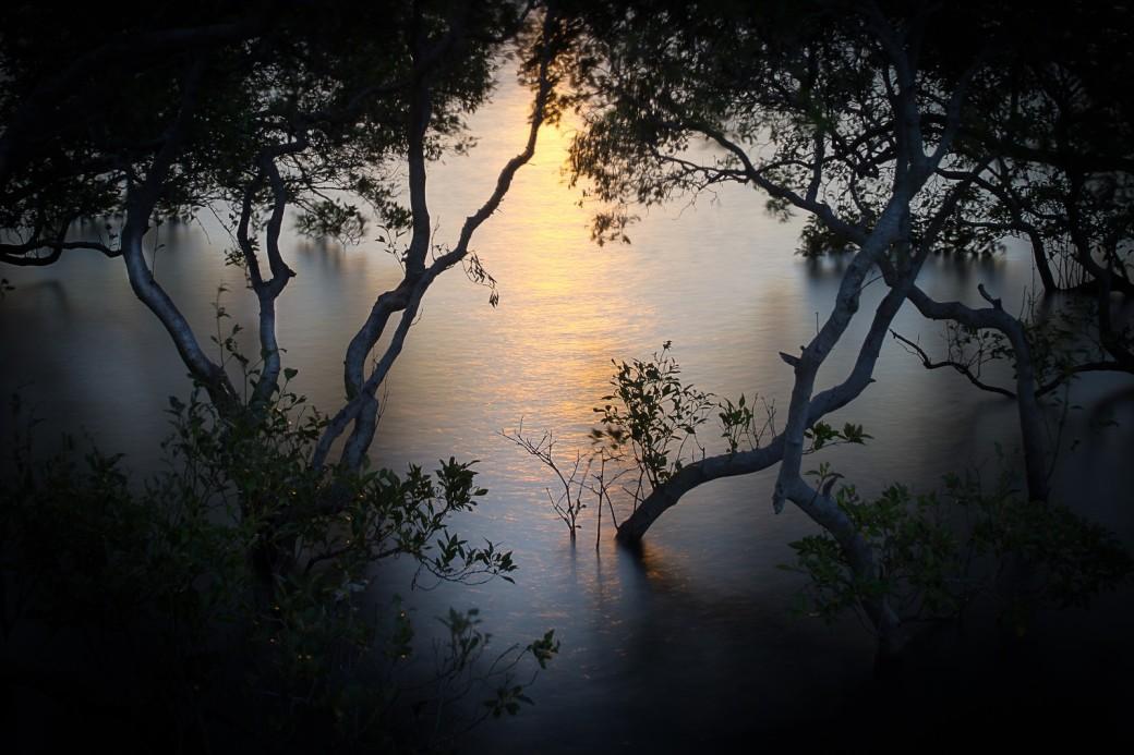 cleveland-mangroves-X3.jpg