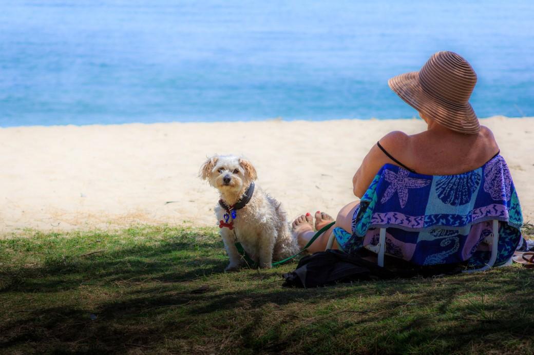 doggy-beach-X3.jpg