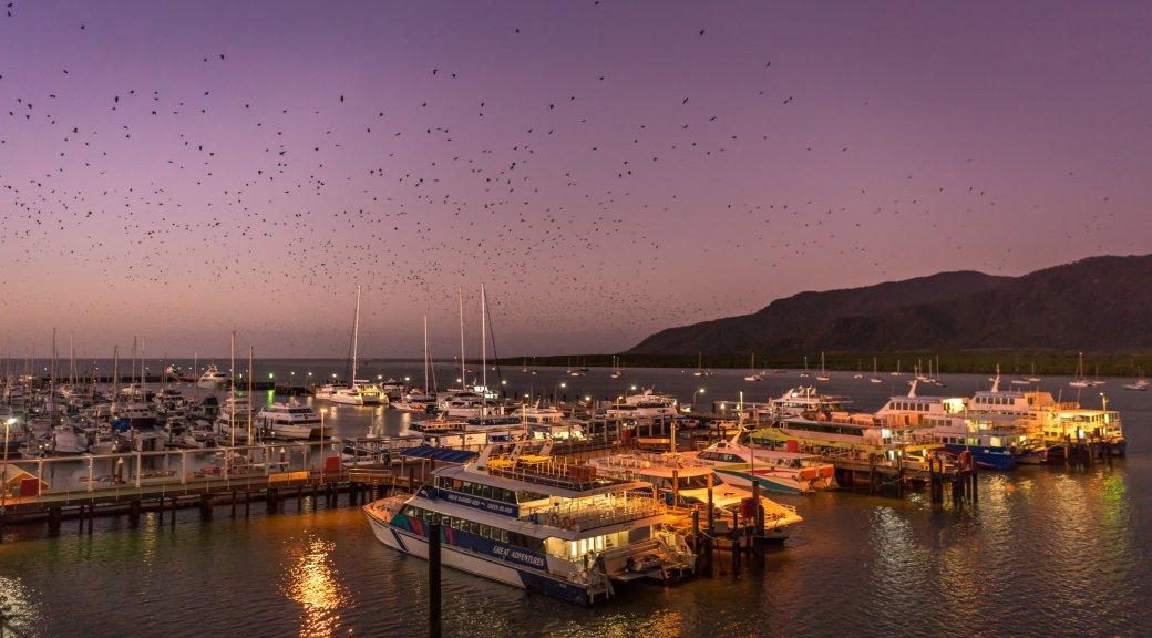 Cairns-Bats-Fill-The-Sky.jpg